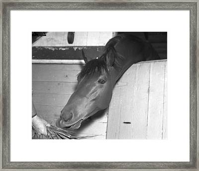 Seabiscuit Triple Crown Winner #8 Framed Print