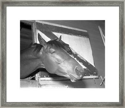 Seabiscuit Triple Crown Winner #9 Framed Print