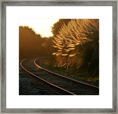 Seacliff Tracks At Sunset Framed Print