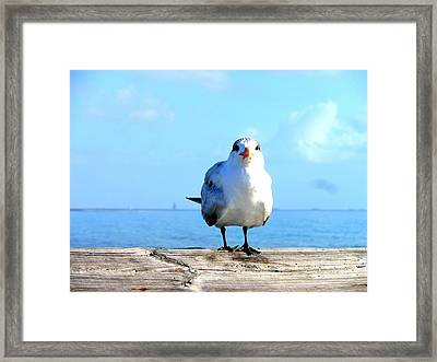 Seafarer Framed Print by Kay Gilley