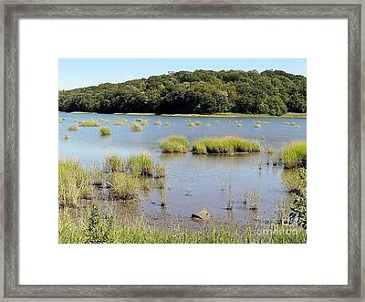 Framed Print featuring the photograph Seagrass by Ed Weidman