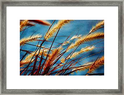 Seagrass In The Breeze Framed Print by Pamela Blizzard