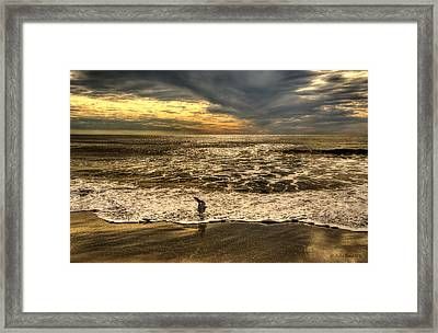 Framed Print featuring the photograph Seagull Sunset Bath by Julis Simo