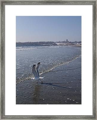 Framed Print featuring the photograph Seagull 1 by Robert Nickologianis