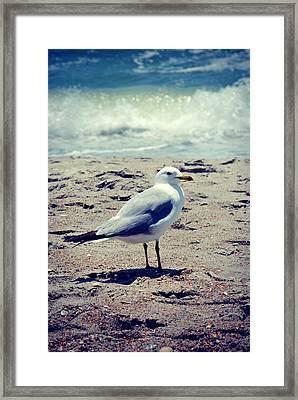 Seagull 1 Series 2 Framed Print