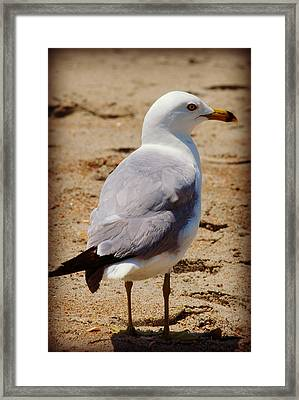 Seagull 3 Series 2 Framed Print by Kelly Nowak