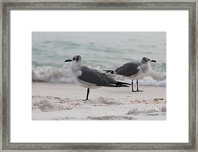Seagull 8 Framed Print by Michelle Powell