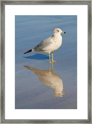 Framed Print featuring the photograph Seagull by Alicia Knust