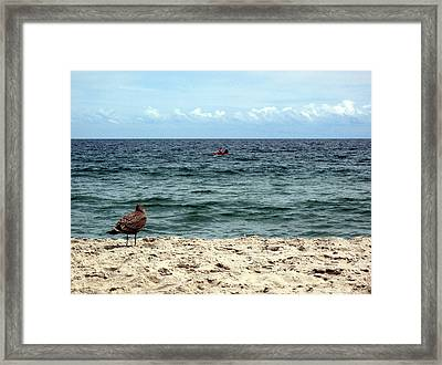 Seagull And Kayak Framed Print by Dorin Adrian Berbier