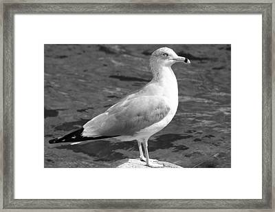 Seagull And Water In Black And White Framed Print by Ben and Raisa Gertsberg