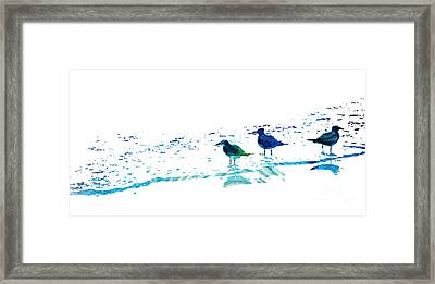 Seagull Art - On The Shore - By Sharon Cummings Framed Print