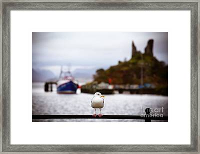 Seagull At Moil Castle Framed Print