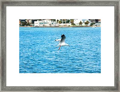 Seagull At St Kilda Framed Print by Yew Kwang