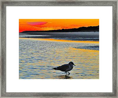 Seagull At Sunset Framed Print by Cindy Croal
