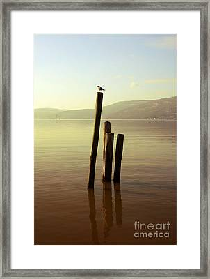 Seagull At Sunset Framed Print