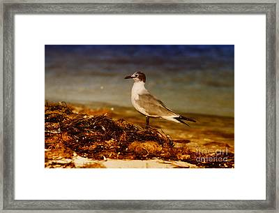 Seagull At The Keys Framed Print