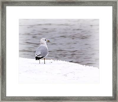 Seagull At The Lake In Winter Framed Print by Elizabeth Budd