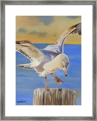 Seagull Ballet Framed Print by Phyllis Beiser