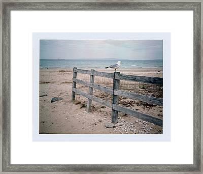 Seagull Framed Print by Brady D Hebert