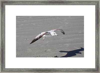 Framed Print featuring the pyrography Seagull by Chris Thomas