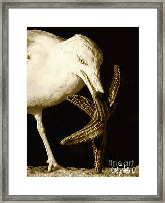 Seagull Dancing With A Star Framed Print