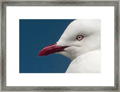 Framed Print featuring the photograph Seagull by Dennis Cox WorldViews