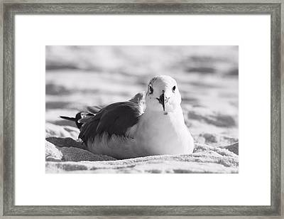 Framed Print featuring the photograph Seagull by Elizabeth Budd