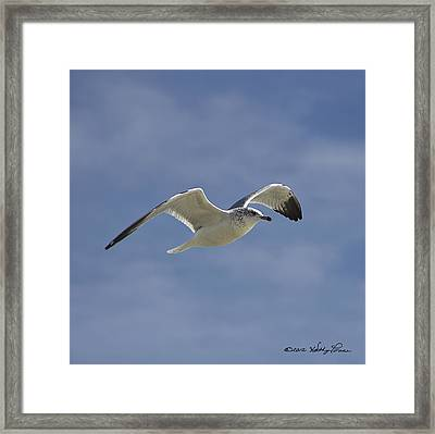 Framed Print featuring the photograph Seagull Flight I by Kathy Ponce