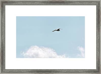 Framed Print featuring the photograph Seagull Flying High by Leif Sohlman