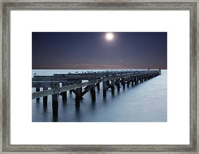 Seagull Hangout Framed Print by Andrea Galiffi