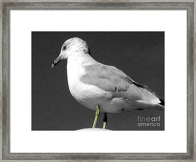 Framed Print featuring the photograph Seagull In Black And White by Nina Silver