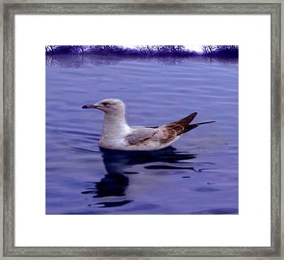 Seagull In Blue Framed Print by Sakna T