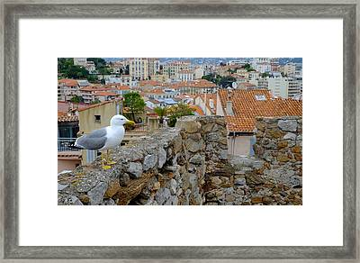 Seagull In Cannes Old City Framed Print