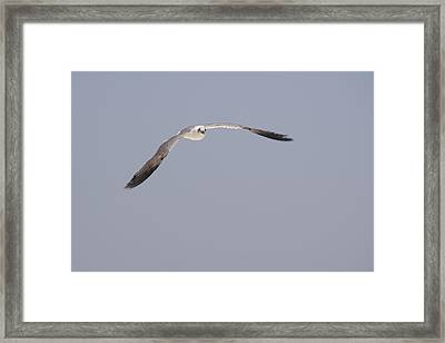 Framed Print featuring the photograph Seagull In Flight Against A Blue Sky by Charles Beeler