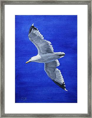Seagull In Flight Framed Print by Crista Forest