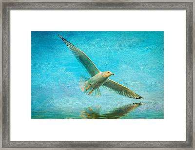 Seagull In Flight Framed Print by Michael Petrizzo