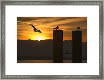 Framed Print featuring the photograph Seagull In The Sunset by Chevy Fleet