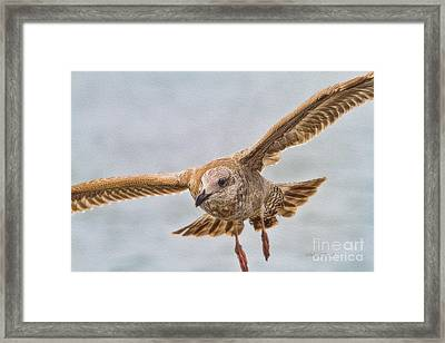 Seagull Inflight Oil Framed Print