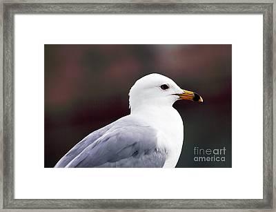 Seagull Framed Print by John Rizzuto