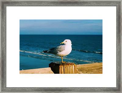 Seagull Framed Print by Kara  Stewart