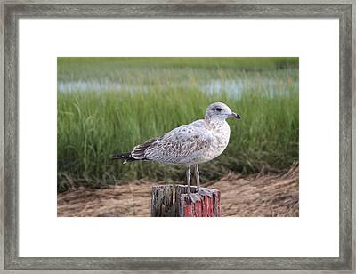 Framed Print featuring the photograph Seagull by Karen Silvestri