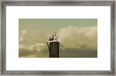 Seagull Lookout Framed Print
