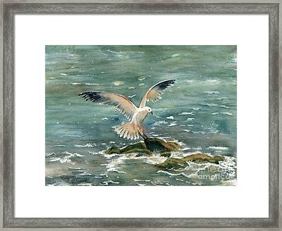 Seagull Framed Print by Melly Terpening