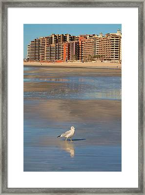 Framed Print featuring the photograph Seagull Motel by Alicia Knust