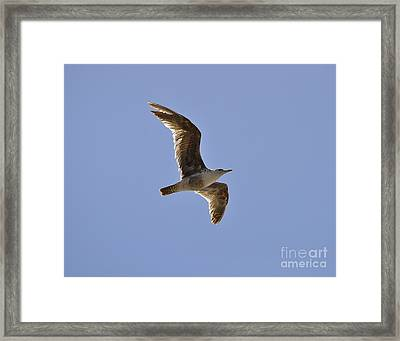 Seagull N Light  Framed Print