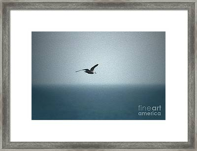 Seagull Framed Print by Nur Roy
