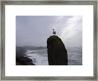 Seagull On A Boulder Framed Print by Yvette Pichette