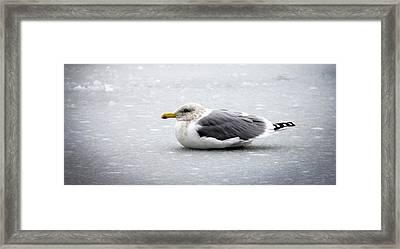 Framed Print featuring the photograph Seagull On Ice by Aaron Berg