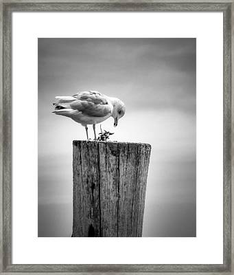 Seagull On Pier  Framed Print by Brian Caldwell