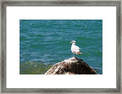 Seagull On Rock Framed Print